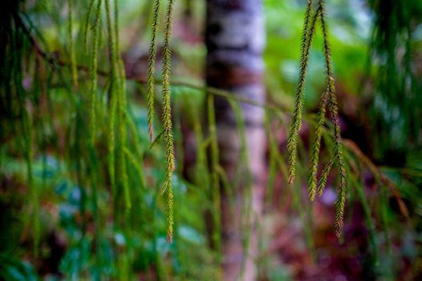 Green Hang