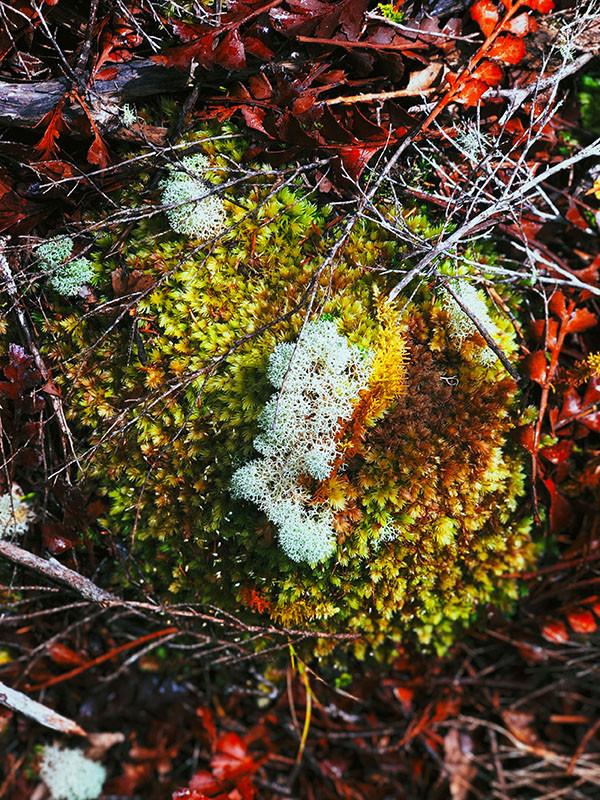 Lichen World