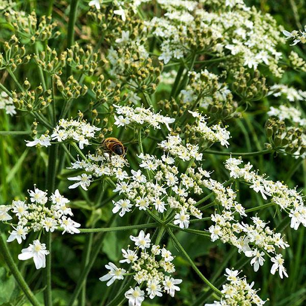 Parsley & Bee