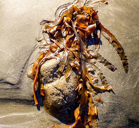 Seaweed In Sand