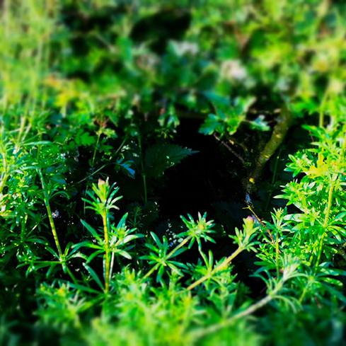 Hedge Haven