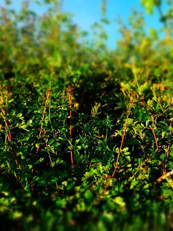 Hedge Hole