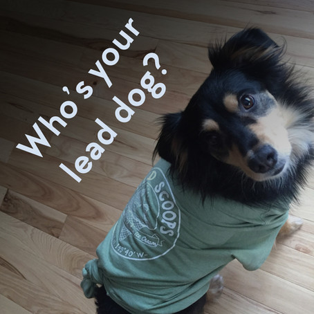 Who's Your Lead Dog? Photo Contest!