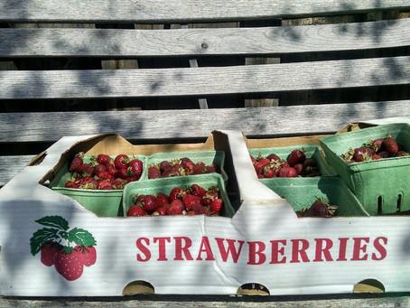 Strawberries gone wild