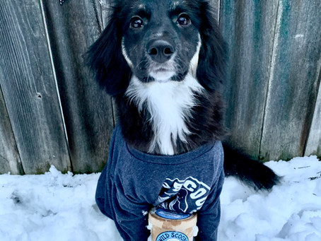 4th Annual Lead Dog of Wild Scoops Competition