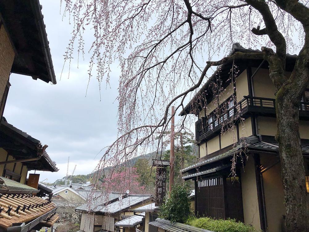 maruyama koen kyoto cookingwiththehamster