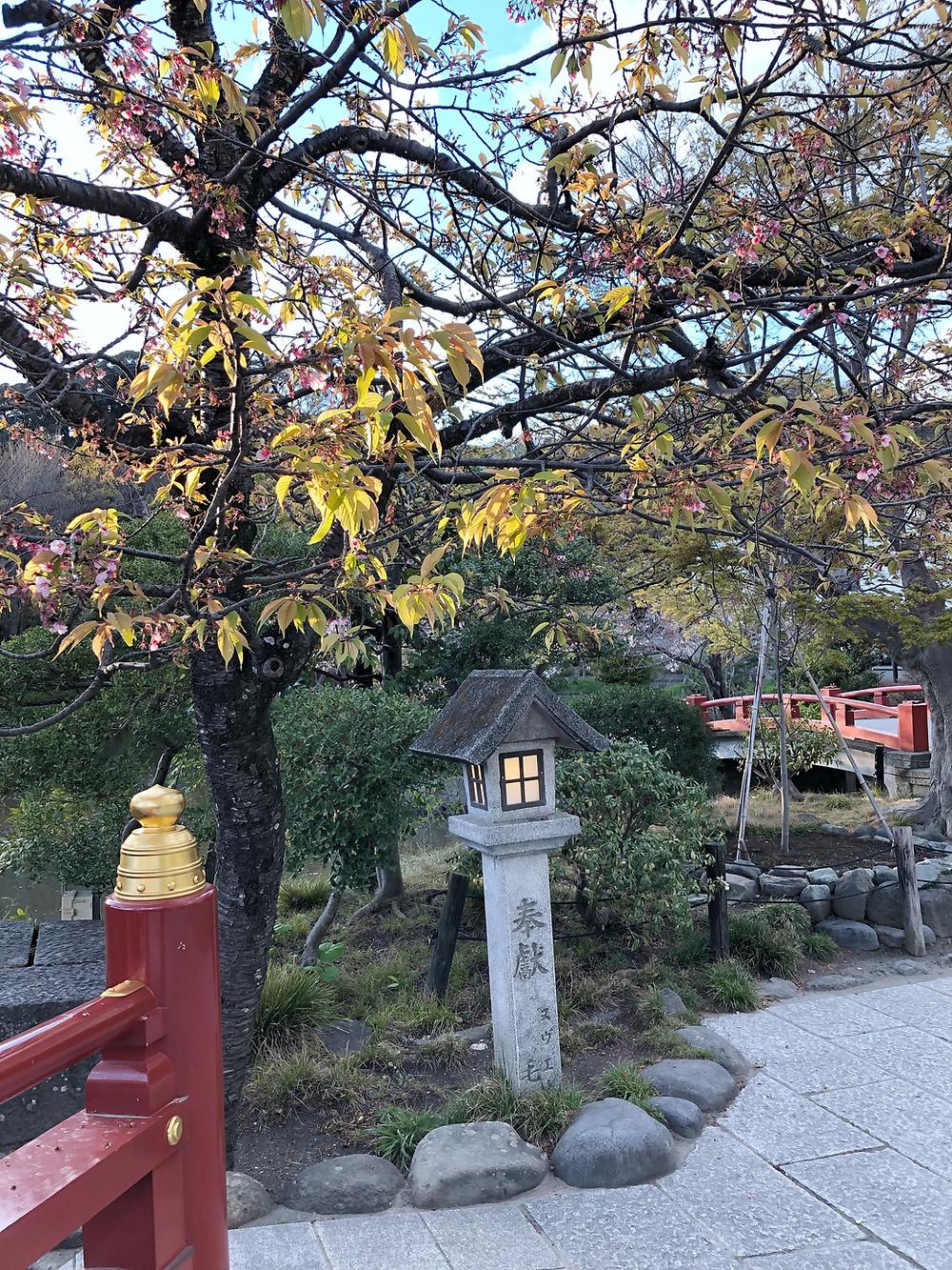 Tsurugaoka Hachimangu kamakura Cookingwiththehamster