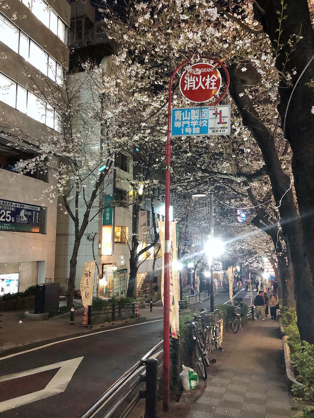 Shibuya tokyo Cookingwiththehamster