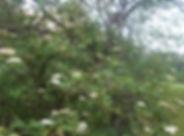 biodiversité_oiseau_3.jpg