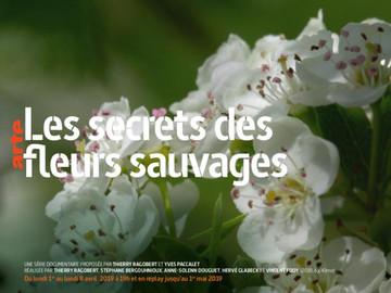 Documentaire – Les fleurs Sauvages