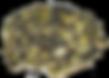PUMPKIN SEED 60% PROTEIN POWDER