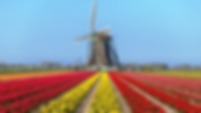 Holland_Tulpen,Windmühle_shutter.png