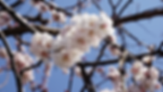 2020-03 apricot-.png