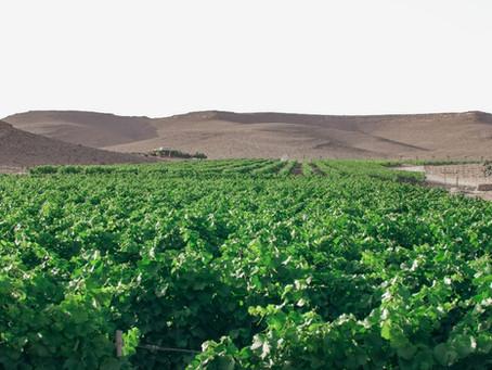 A volta ao mundo em 80 vinhos - Israel