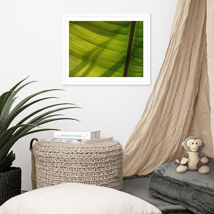 Banana Leaf framed photograph