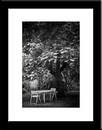 Colombes framed print