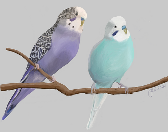 Budgies in Purple and Blue unframed drawing
