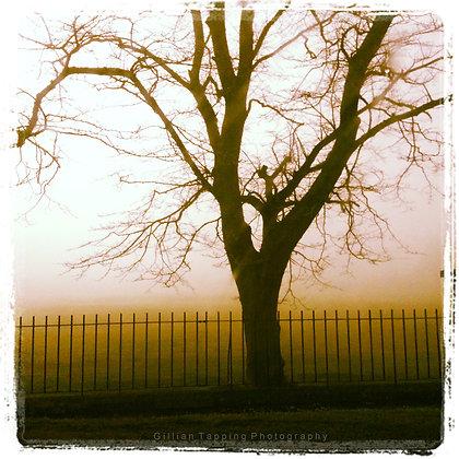 A Foggy Morning unframed photograph