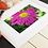 Thumbnail: Yellow and Pink Flower unframed photograph