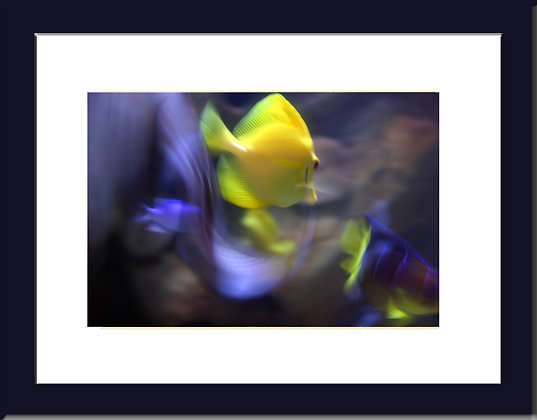Framed Tropical Fish Print