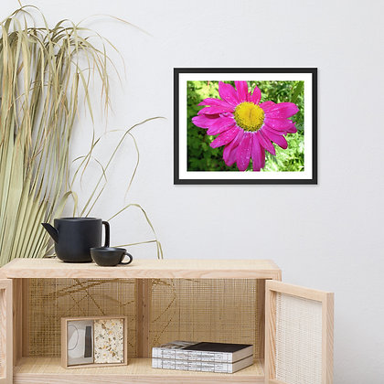 Yellow and Pink Flower framed photograph