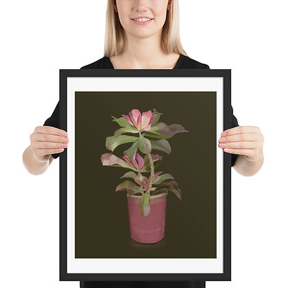 Succulent in Pink Pot framed drawing