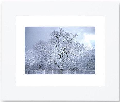 Framed Winter Tree Print