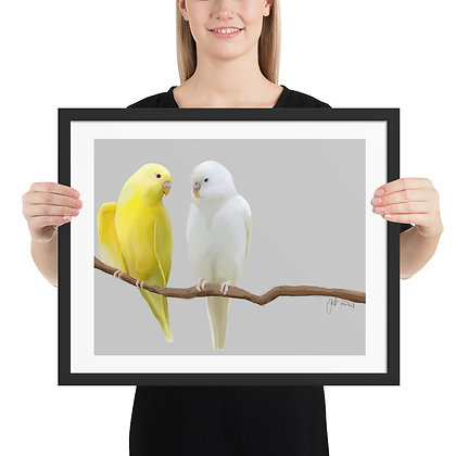 Budgies in White and Yellow framed drawing