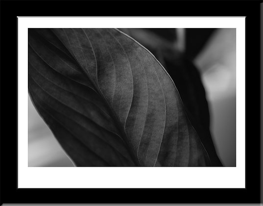Black and White macro framed print