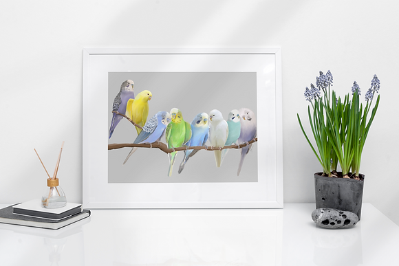 Malcolm's Budgies framed drawing