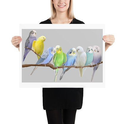Malcolm's Budgies unframed drawing