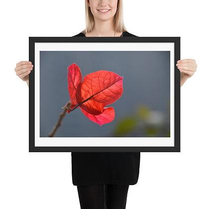 Red Leaf framed photograph