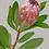 Thumbnail: Protea unframed drawing