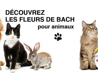 Animaux de compagnie & Fleurs de Bach