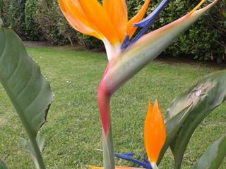 L'Élixir Floral d'Ave del Paraîso