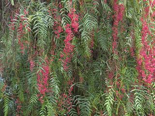 L'Élixir Floral d'Arbol del Perù