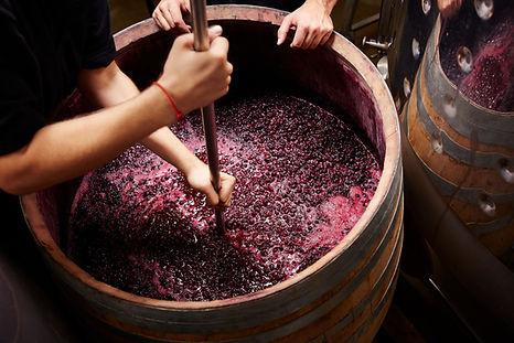 fazendo o vinho