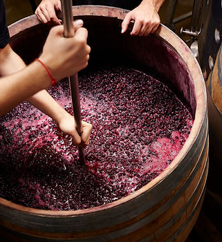 grapes in wine barrel