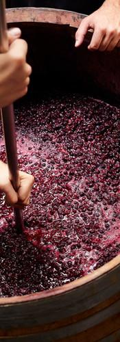 Making Wine