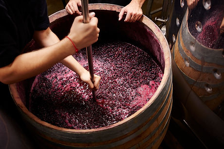 Wine Making, Making Wine, Smashing Grapes into Wine