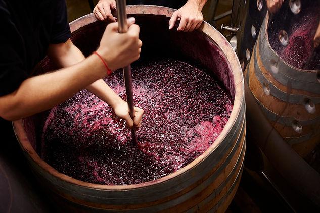 Crushing wine grapes in an oak wine barrel