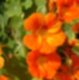 STA60315 (3)_edited.jpg