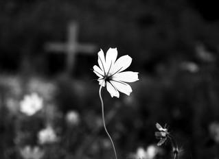 A MORTE NÃO EXISTE