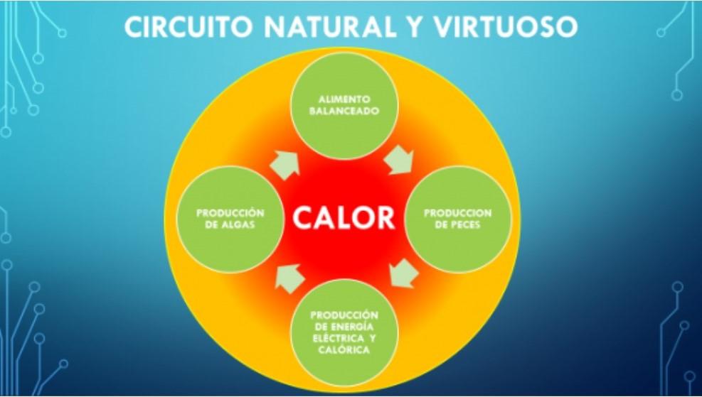 acuaponia circuito natural y virtuoso