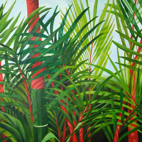 Bambú rojo