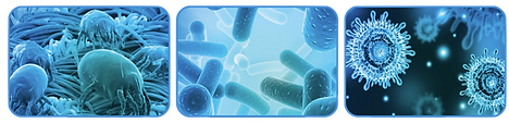 Molben-Bakterien-Viren.png