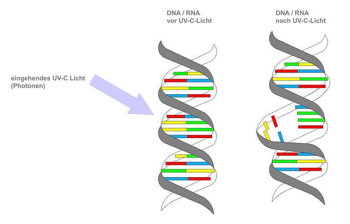 UV_C_Licht_zerstört_DNA-RNA.jpg
