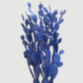 cactus_bleu_recadré.jpg
