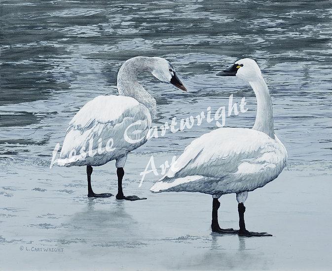 Wetland Gossip