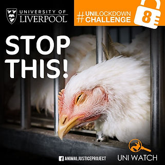 Animal Justice Project University of Liverpool
